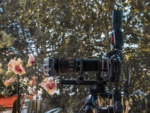 Makrofotografie mit Orchidee Nikon D3x mit Balgengerät PB-6und Objektiv AFS VR 105/2,8 MIKRO