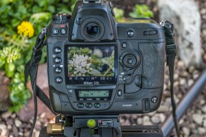 Makrofotografie mit Dickblattgewächsen Nikon D3x mit Objektiv AFS VR 105/2,8 MIKRO