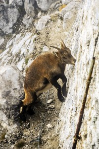 Wo ist die Haustür? Dieses schöne Tierchen fanden wir an der Bergstation der Innsbrucker Nordkettenbahn auf die Nordkette.