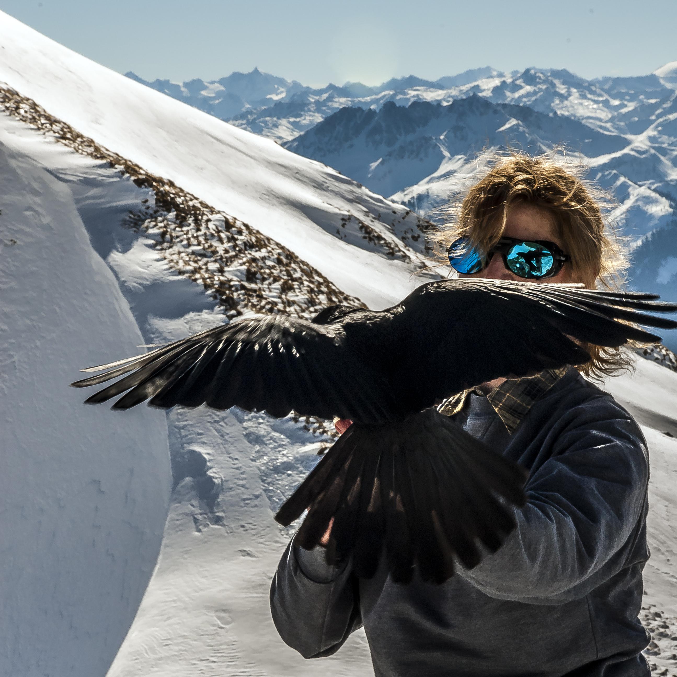 """""""Die Vögel"""" - Teil 2 Alpendohle im Rofan"""