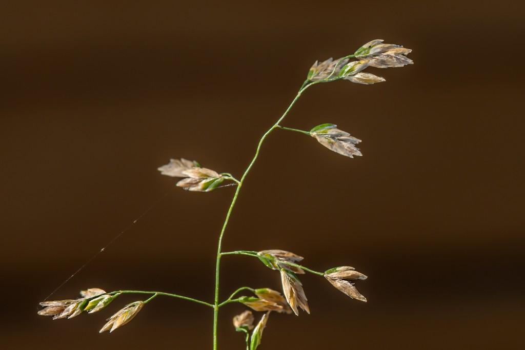 Gras - eine Spielerei