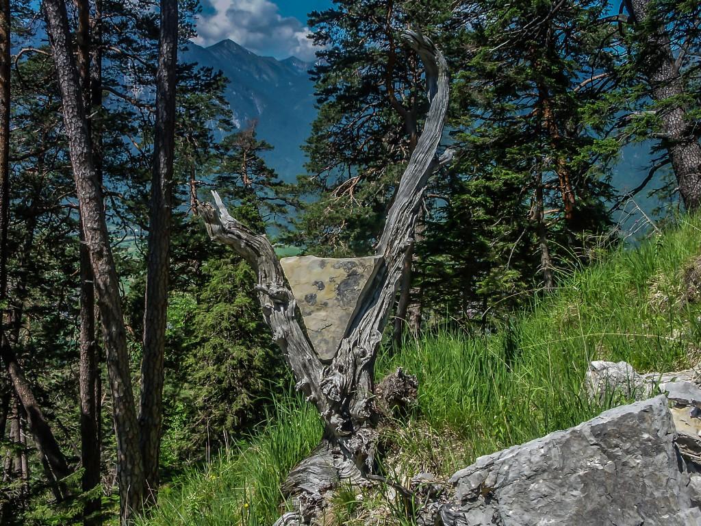 Träumen Der Baum drängte sich für das Fotoshooting auf :-)