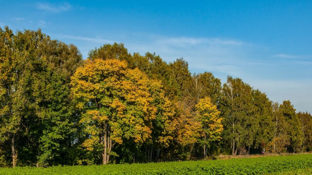 Herbst in meiner Heimat