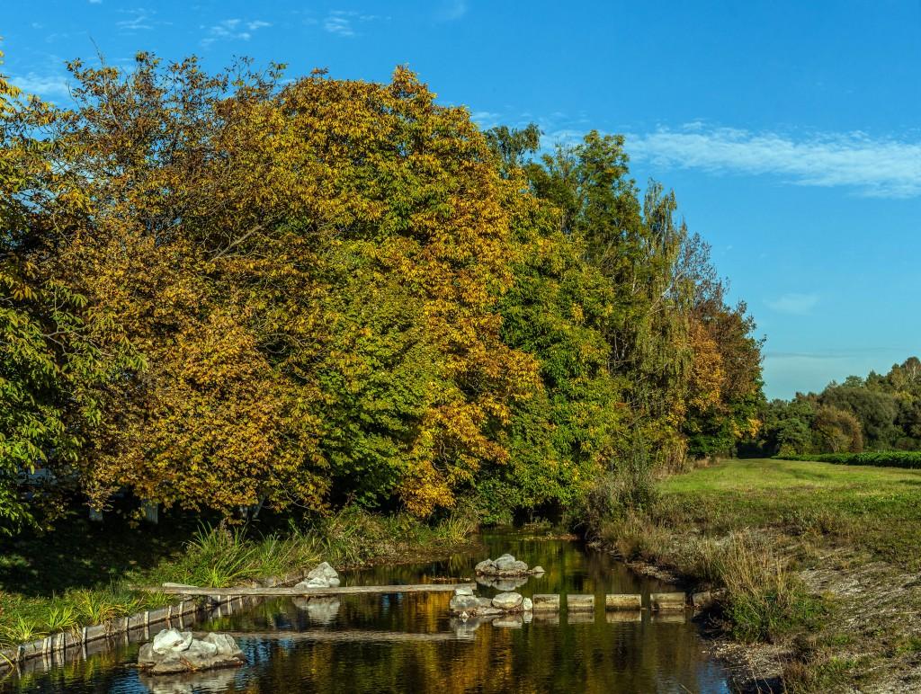 Herbstlicher Lichtzauber im Schwarzhölzl