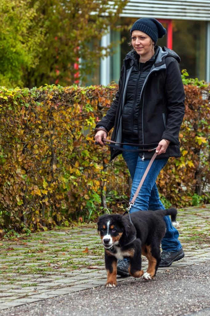 """Welpentreffen vom 24.10.2015 """"Frauchen"""" mit Berner Sennerhündin Hazel 15 Wochen alt"""
