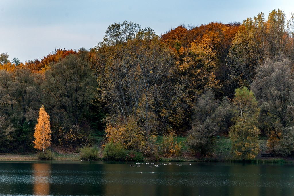Herbst am Karlsfelder See 2