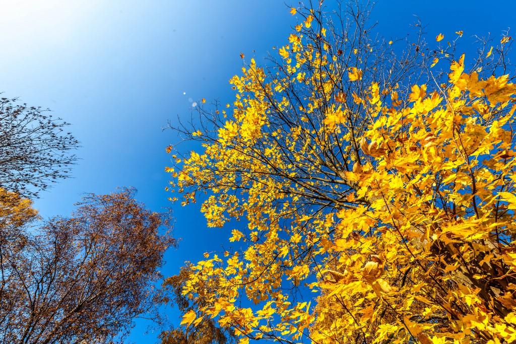 Herbsthimmel im Schwarzhölzl.