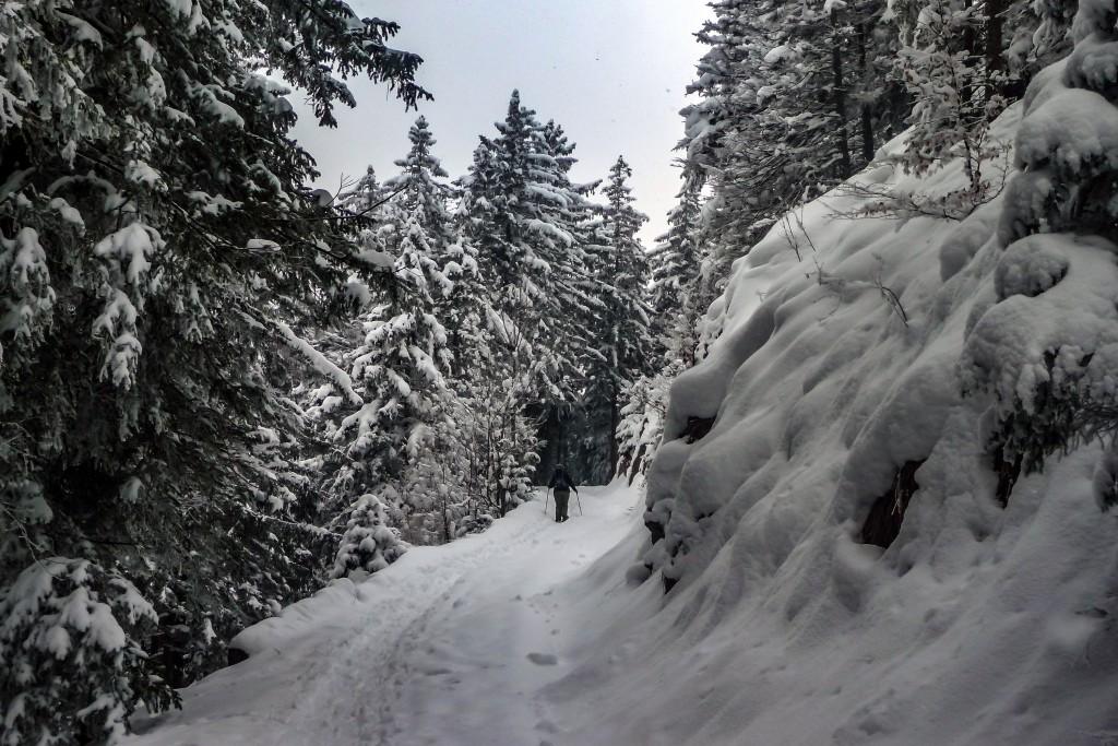 Schneeschuhtour auf den Rehleitenkopf 1