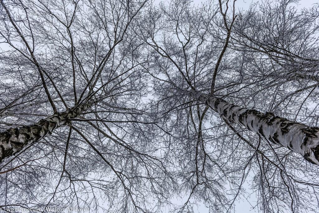 """Die Winterperspektive von """"Wir wachsen in den Himmel"""""""