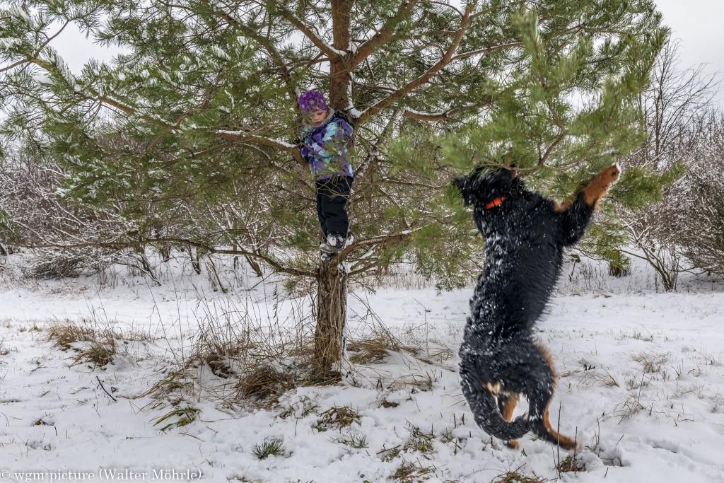 Wie funktioniert das mit dem Baum? Berner Sennerhündin 27 Wochen alt