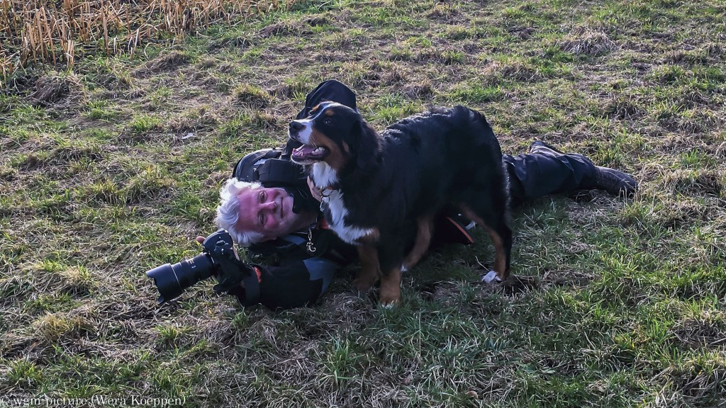 Fotografenleben :-) Berner Sennerhündin 30 Wochen alt