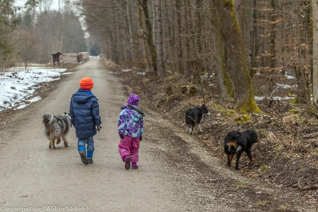 Kinder und Hunde Berner Sennerhündin 34 Wochen alt mit zwei Australian Shepherds