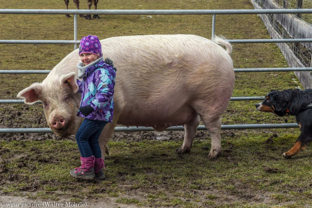 Da kann Schwein sich sauwohl fühlen