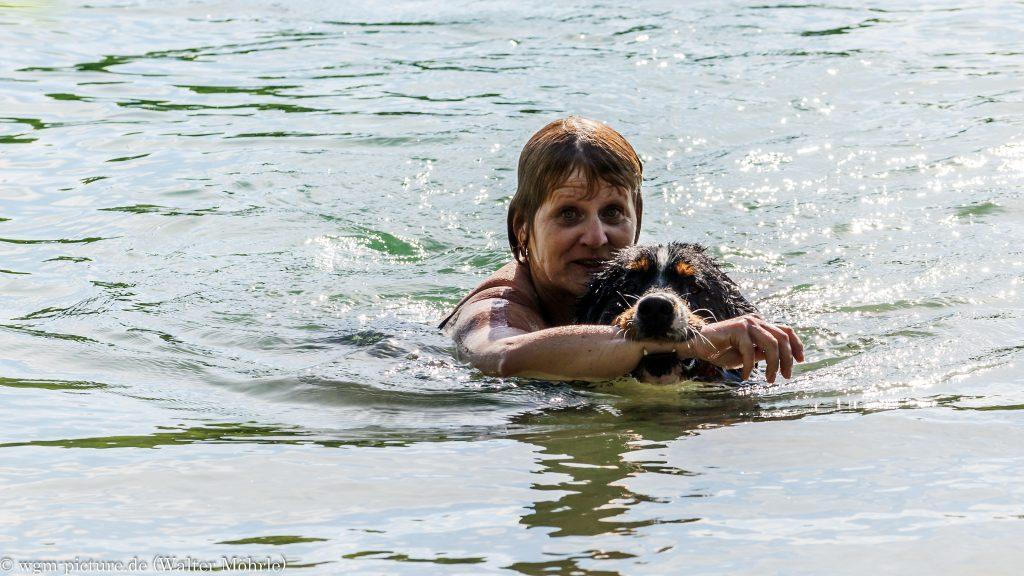 Rettungsschwimmhund Hazel? Berner Sennerhündin Hazel 45 Wochen (10 Monate) alt