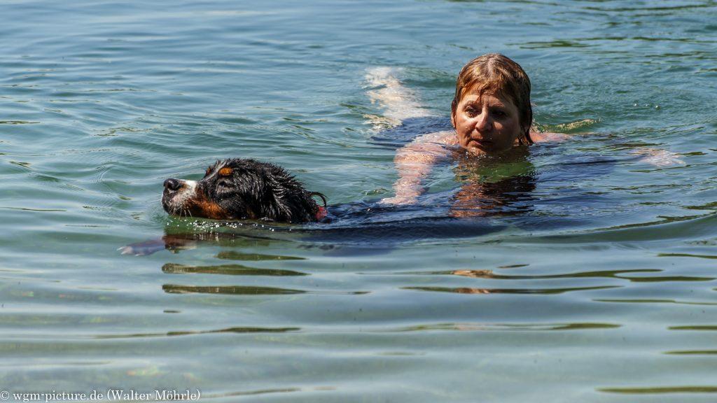 Badetag, weil Hazel baden mag Berner Sennerhündin Hazel 47 Wochen (10 Monate) alt