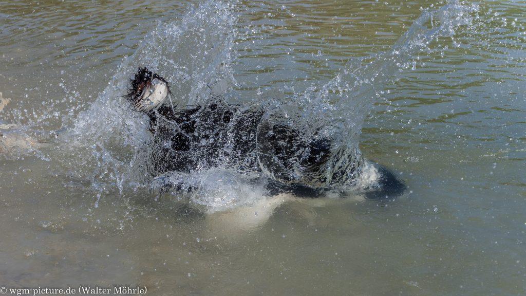 Neues vom Steinetauchhund Willi