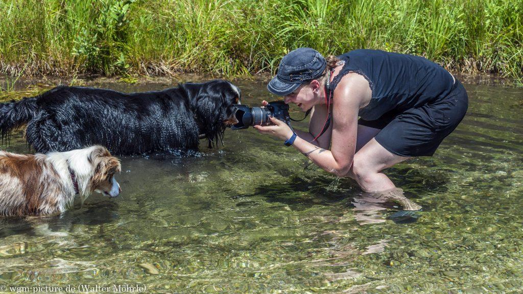 Paparazzo im Wasser - müssen wir guggen Berner Sennerhund Seppl und Australian Shepherd Hündin Bambi