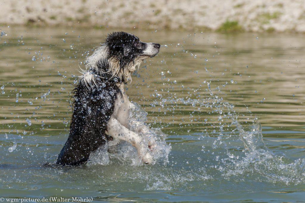 Wasserschnapphund Willi