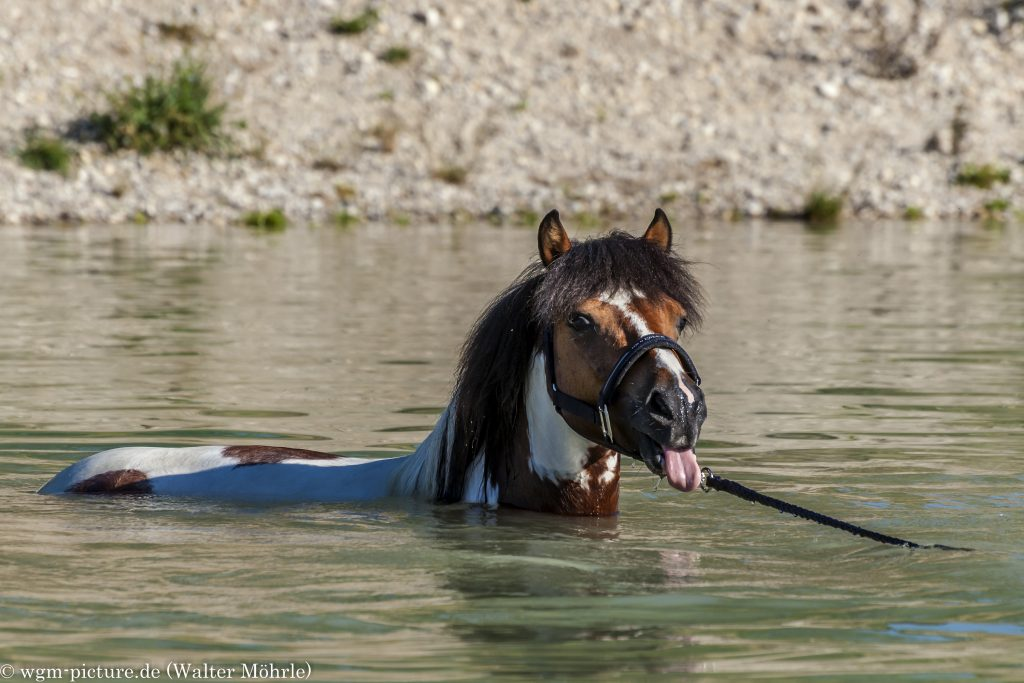 Pony meets dog in the lake
